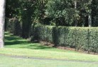 Abbotsford NSW Wire fencing 15